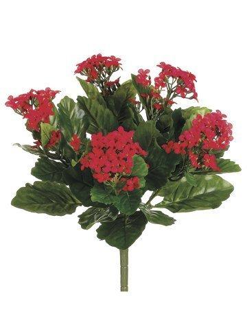 "13.5"" Kalanchoe Bush x5 with150 FlowersRed"