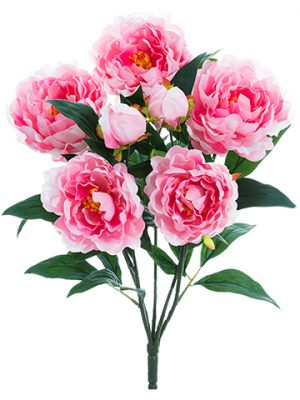 "22"" Peony Bush x5 Pink"