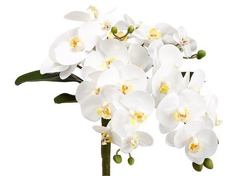 """13"""" Phalaenopsis OrchidBouquetWhite"""
