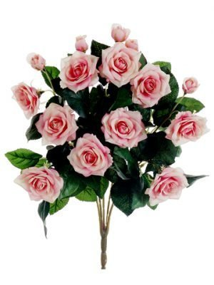 "15"" Rose Bush x10 Pink Cream"