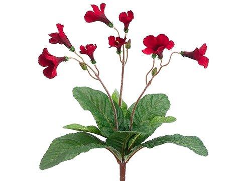 "15"" Streptocarpus Bush Red"