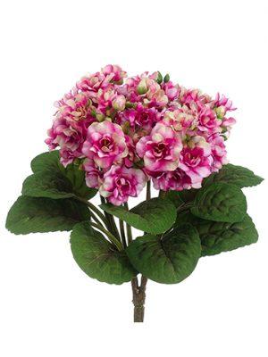 "12"" African Violet Bush Fuchsia Cream"