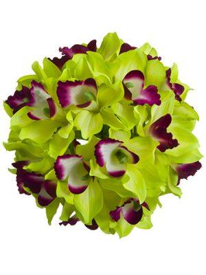 "8"" Cymbidium Orchid KissingBallGreen Burgundy"
