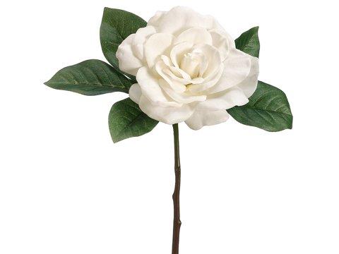 "11"" Gardenia PickCream"
