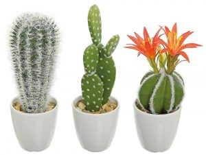 Faux cacti: Echinopsis, prickly pear, barrel cactus