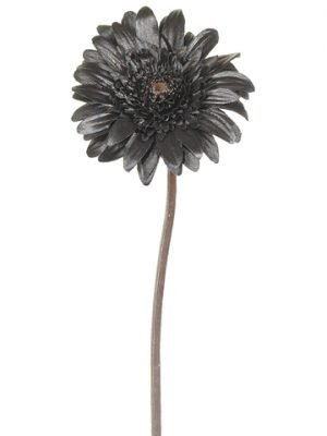 "21"" Black Magic Gerbera Daisy Spray Black"