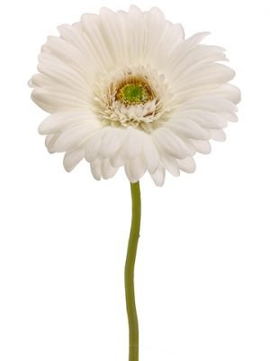 "12.5"" Gerbera Daisy Spray Cream"