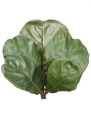 "10""-13.5""H Fiddle Leaf Spray (5 ea/bag) Green"