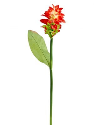 """35"""" Ginger Flower Spray Two Tone Red"""