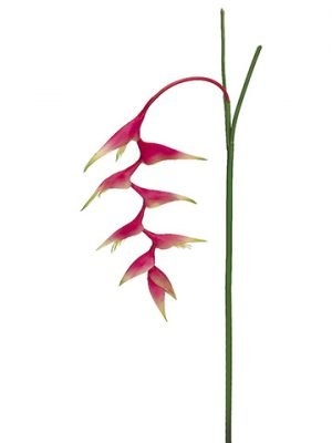 """48"""" Heliconia Hanging Spray Beauty"""