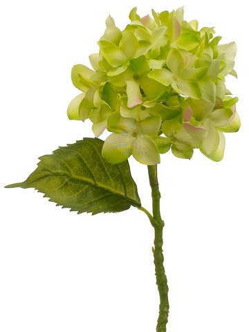"13.5"" Hydrangea Spray Green"