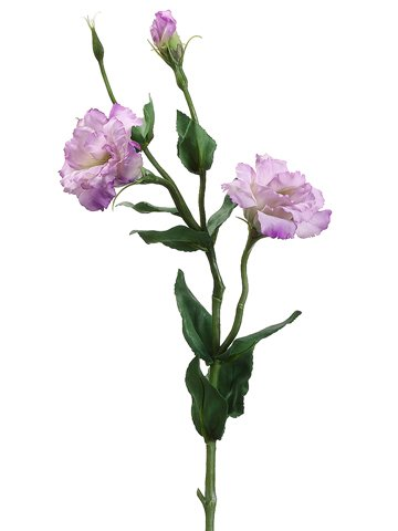 """25"""" Lisianthus Sprayw/Water-Resistant StemTwo Tone Lilac"""