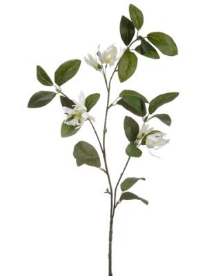 "31"" Michelia Spray  White"