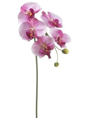 """28"""" Phalaenopsis Orchid Spraywith 5 Flowers and 2 BudsOrchid Violet"""