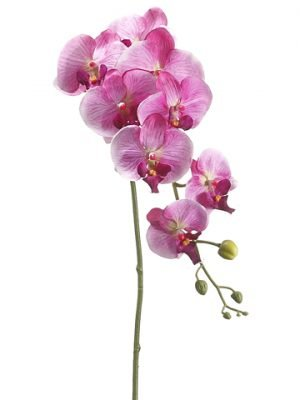 "40"" Phalaenopsis Orchid Spray with 8 Flowers and 6 Buds Orchid Violet"