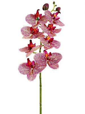 "28"" Phalaenopsis Orchid Spray Cerise Orchid"