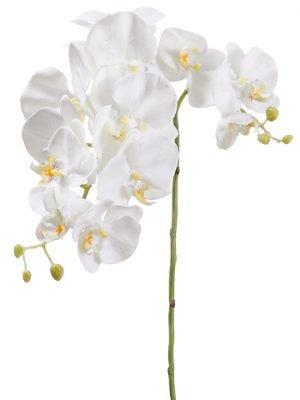 "34"" Phalaenopsis Orchid Spray Cream"