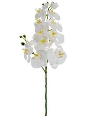 "34"" Phalaenopsis Orchid Spray White"