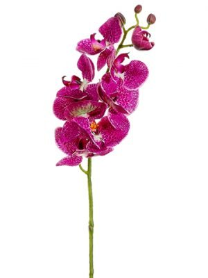 "29"" Phalaenopsis Orchid Spray Orchid Cream"