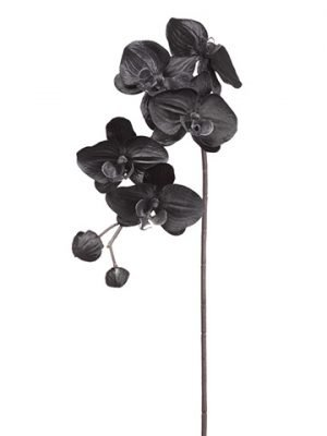 "29"" Phalaenopsis Orchid Spray With 5 Flower And 2 Buds Black"