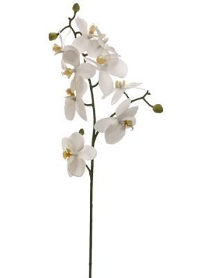 "24"" Phalaenopsis Orchid Spray White"