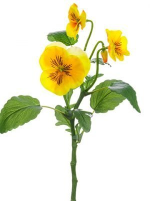 "14"" Pansy Spray Yellow"
