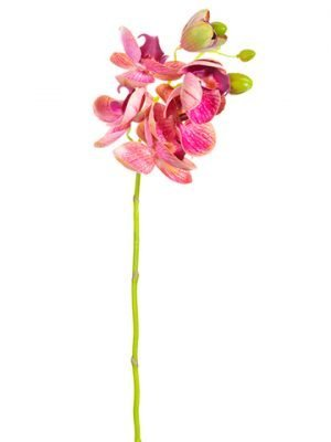 """21"""" Phalaenopsis Orchid Spray Orchid"""