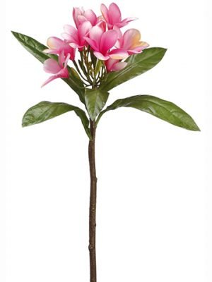 "22"" Plumeria Spray Two Tone Rubrum"