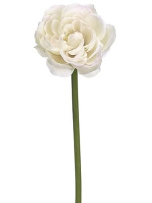 "19"" Ranunculus Spray  Cream Blush"