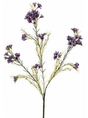 "27"" Waxflower Spray x3 with72 Flowers and 36 BudsPurple"