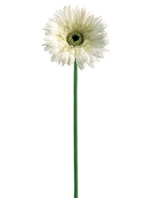 "24"" Real Touch Gerbera Daisy Spray x1 White"
