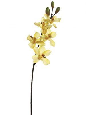 "25"" Cymbidium Orchid Spray with 5 Flowers and 3 Buds Mustard Burgundy"