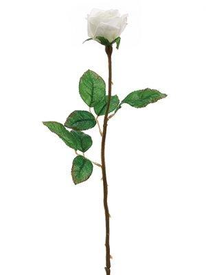 "21"" Single Rose BudCream"