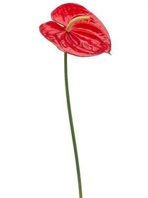 """25"""" Anthurium Spray Red"""