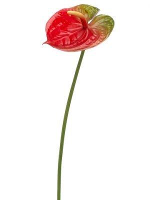 """25"""" Anthurium Spray Red Green"""