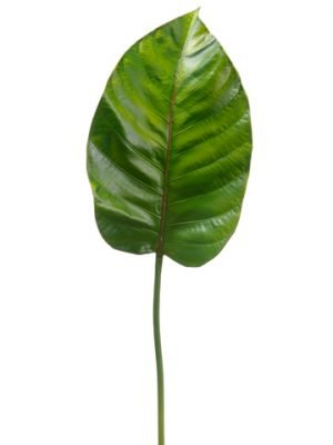 """24"""" Broad Leaf SprayGreen"""