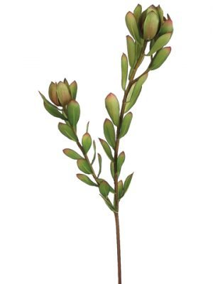 "24"" Mini Leucadendron Spray Green Burgundy"