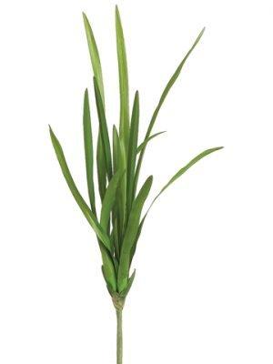 "16"" Cymbidium Orchid FoliagePlantGreen"