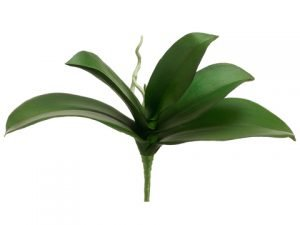 "10"" Phalaenopsis Leaf Plant Green"