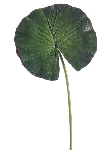 "8""Dx24""H Water Lily Leaf Spray  Green"