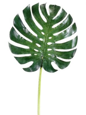"34"" Large Monstera Leaf Spray  Green"