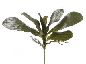 """16"""" Phalaenopsis Orchid LeafPlantGreen"""