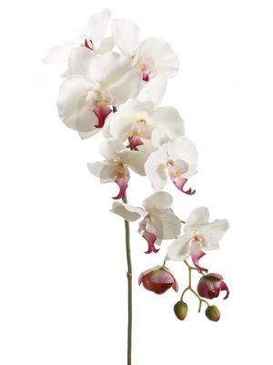 "44.5"" Phalaenopsis Orchid Spray with 9 Flowers and 3 Buds Cream Rubrum"