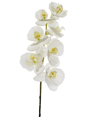 "40"" Phalaenopsis Orchid Spray White"