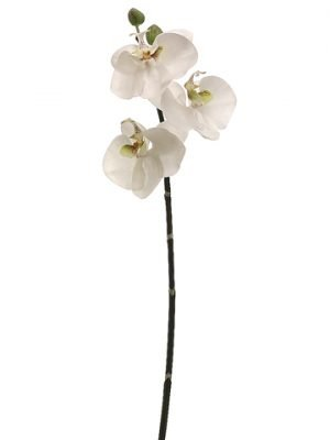 "30"" Phalaenopsis Orchid Spray Blush"