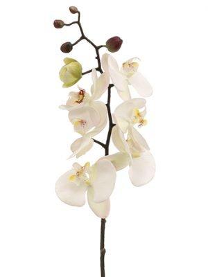 "28"" Phalaenopsis Orchid Spray Cream Pink"