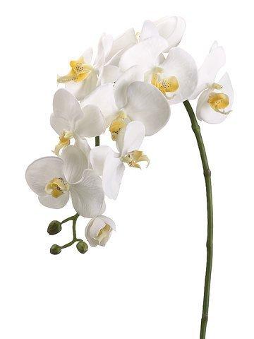 "31.5"" Phalaenopsis Spray Cream"