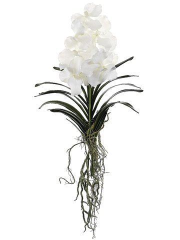 "20.5"" Vanda Orchid Plant with Leaf and Roots White"