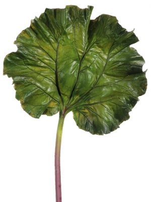 "40"" Rhubarb Large Leaf Spray  Green"