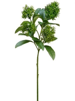 "26.5"" Skimmia Spray Green"